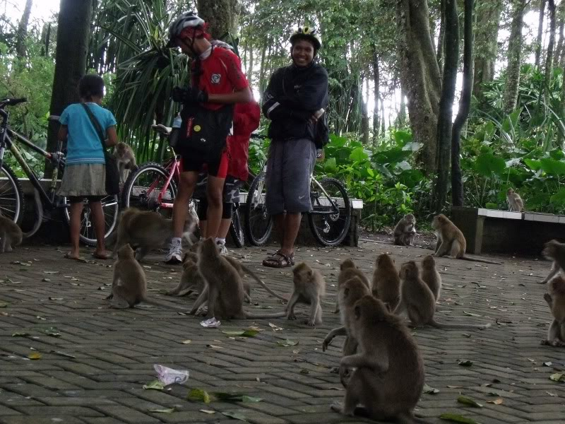 Monyet Lapar di Solear