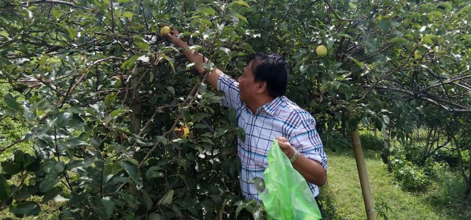 Sensasi Petik dan Makan Apel di Kebun