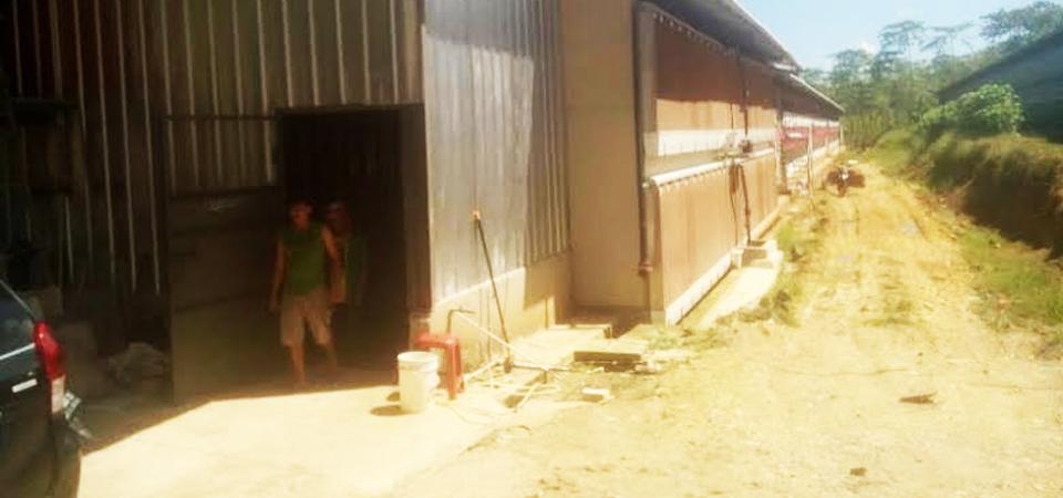 Kandang Ayam Bau di Blok Pasir Jambu