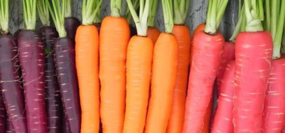 5 Makanan untuk Kesehatan Mata