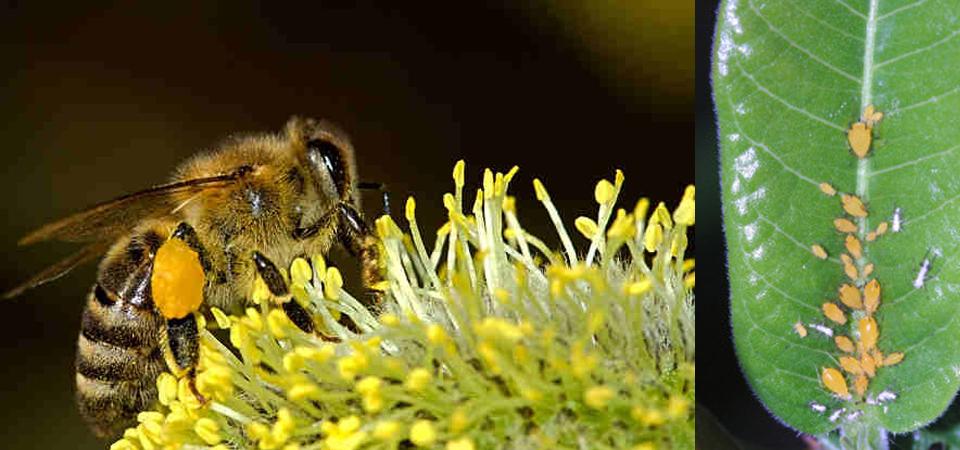 Hasil Riset Beda Picu Debat Aman Tidaknya Penggunaan Pestisida Terlarang