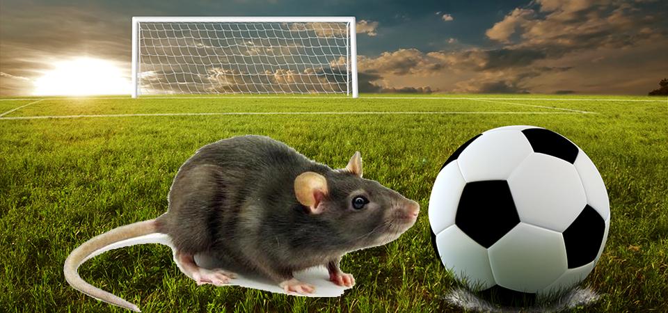 Korupsi dan Cuci Uang Lewat Sepakbola