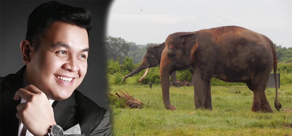Tulus, Sukses dengan Gajah Kini Perhatikan Gajah