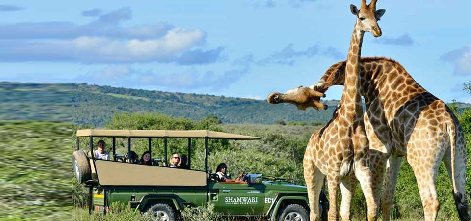 Asyiknya Jalan-jalan ke Shamwari Game Reserve