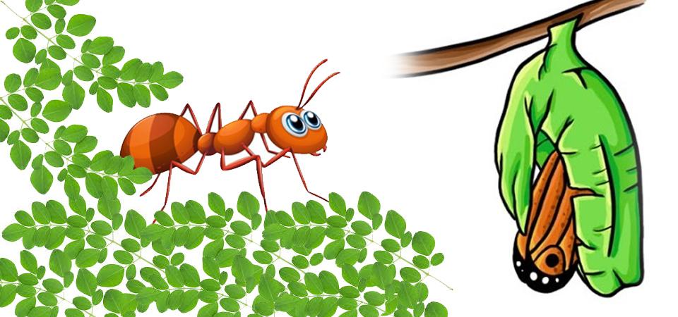Semut Sombong Terjebak Lumpur