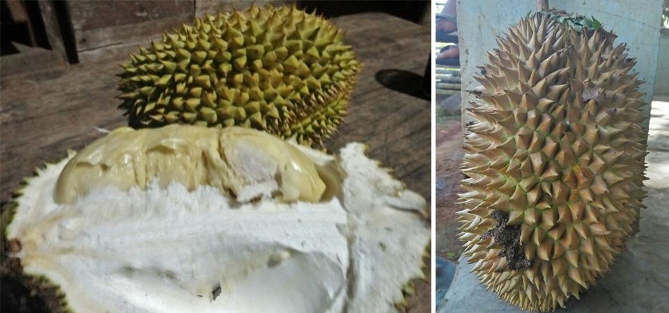 Balada Durian Jatuh Menjelang Subuh