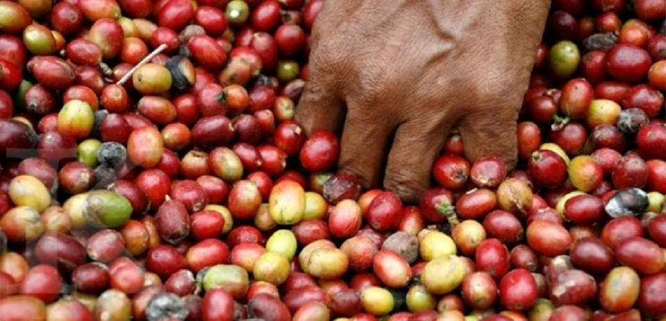 Pemkab Lany Jaya Apresiasi Polri Dukung Kemandirian Petani Kopi