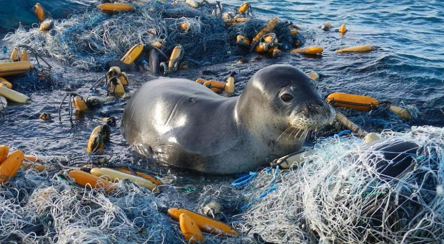 Harapan Baru Atasi Pencemaran Plastik di Laut