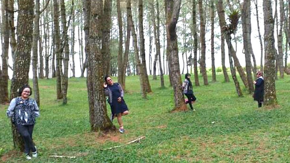 Menikmati Danau Toba dari Taman Pinus