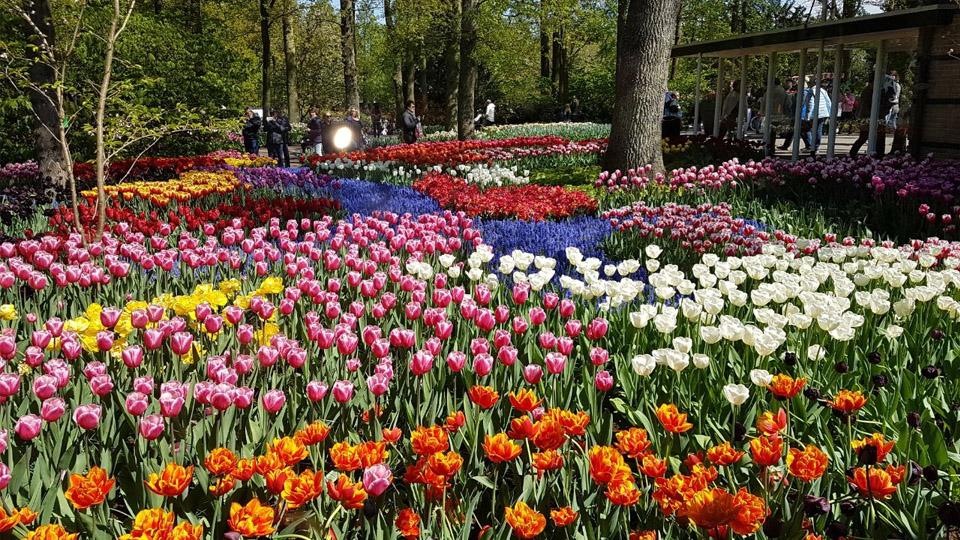 Keukenhof, di Mana Tulip-tulip Bermekaran