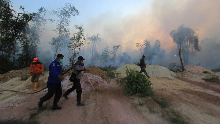 Ilustrasi kebakaran hutan dan lahan–foto istimewa