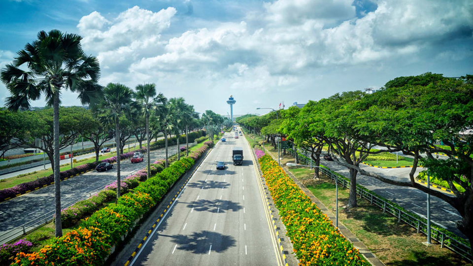 Trembesi di Singapura, Trembesi di Lombok