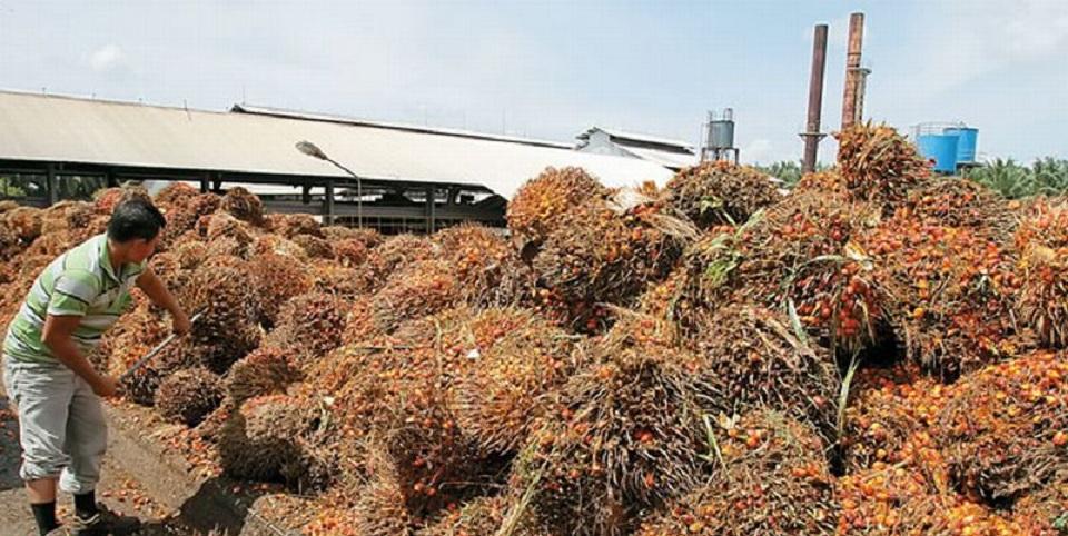 UE 'Ngawur' Tuding Sawit Biang Deforestasi