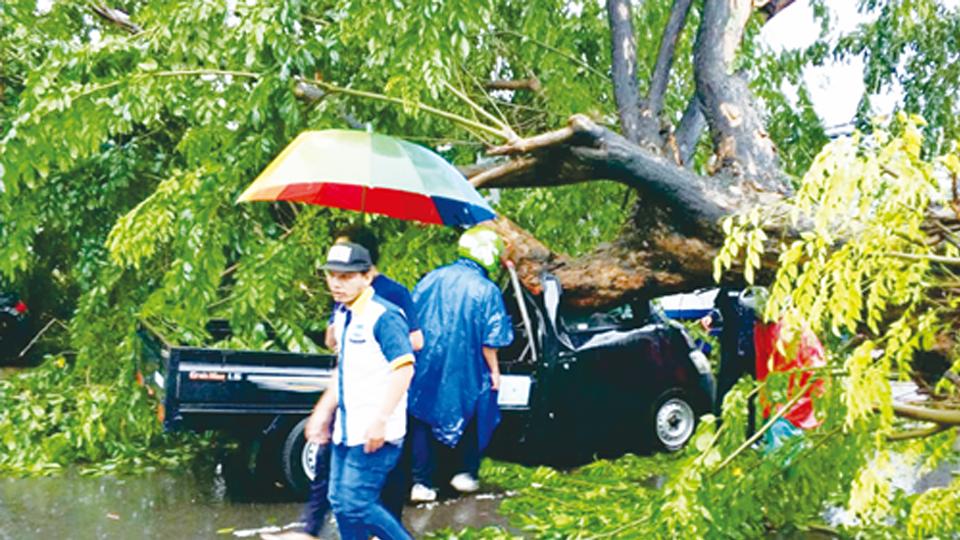 Suyanto Tewas Tertimpa Pohon Tumbang