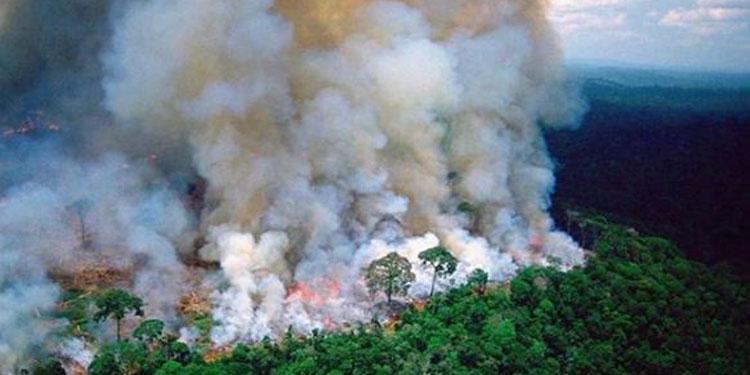 Prilly Unggah Curhatan Leonardo Dicaprio soal Kebakaran Amazon