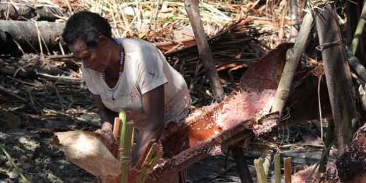 Alokasi Dana Otonomi Khusus Papua 2020 Rp8,374 Triliun