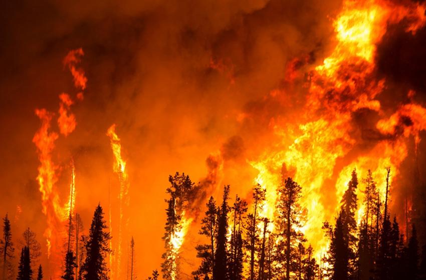 Dampak Asap Kebakaran Hutan, Mengerikan!