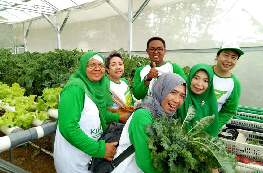 Panen sayuran hidroponik. (foto: ist)