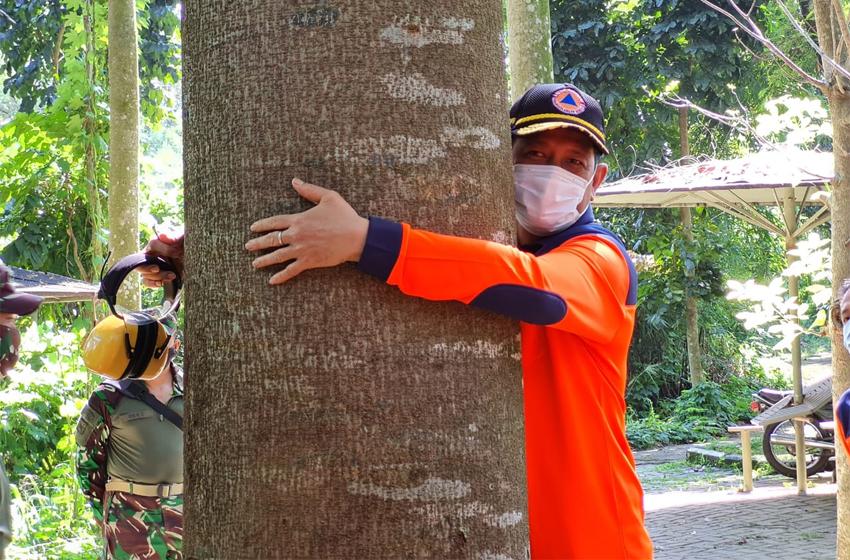 Kepala BNPB, Letjen TNI Doni Monardo memeluk pohon sengon laut di hutan kota Kopassus. Pohon itu ia tanam tahun 2012, saat menjabat Wadanjen Kopassus. Tinggi pohon saat ditanam sekitar 120 centimeter. (foto: egy massadiah)