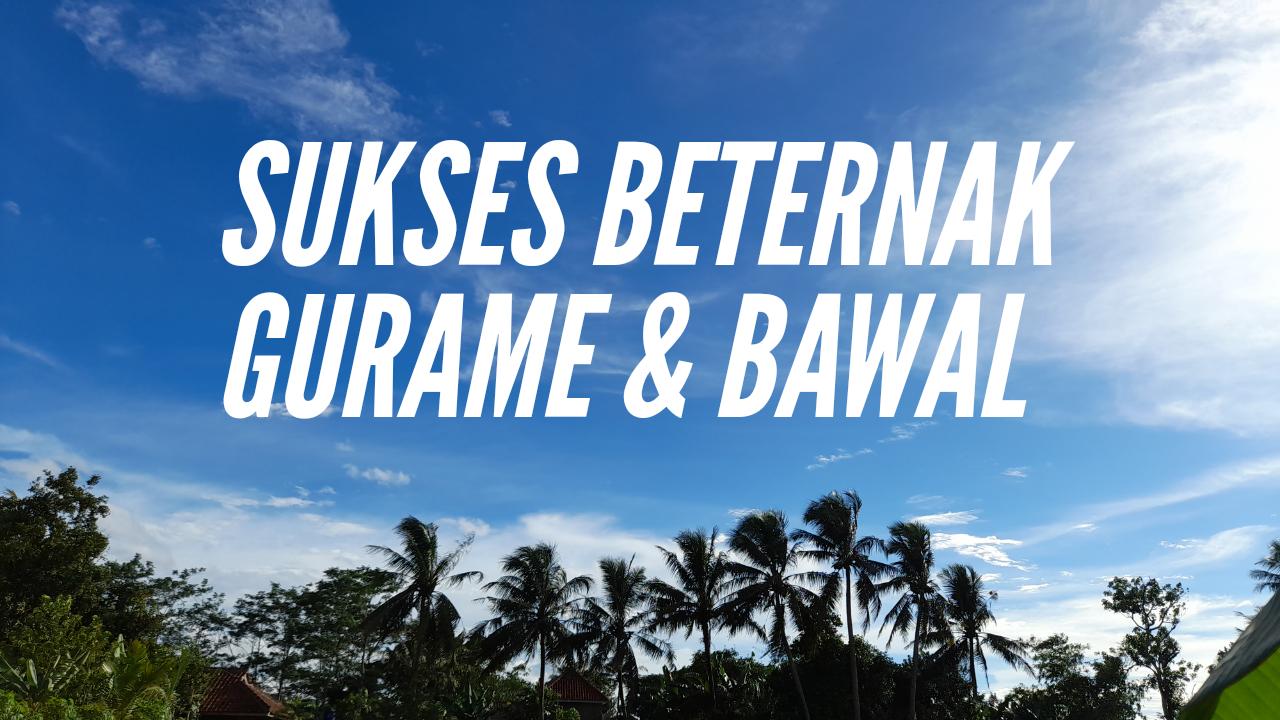 Jarnuji: Peternak Sukses Gurame & Bawal di Desa Babakan